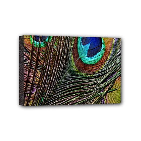 Peacock Feathers Mini Canvas 6  X 4