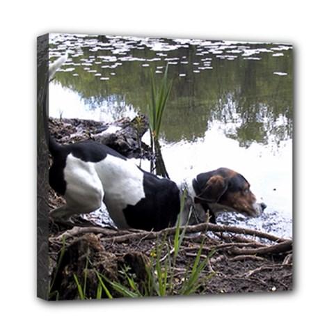 Treeing Walker Coonhound In Water Mini Canvas 8  x 8