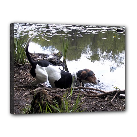 Treeing Walker Coonhound In Water Canvas 16  x 12