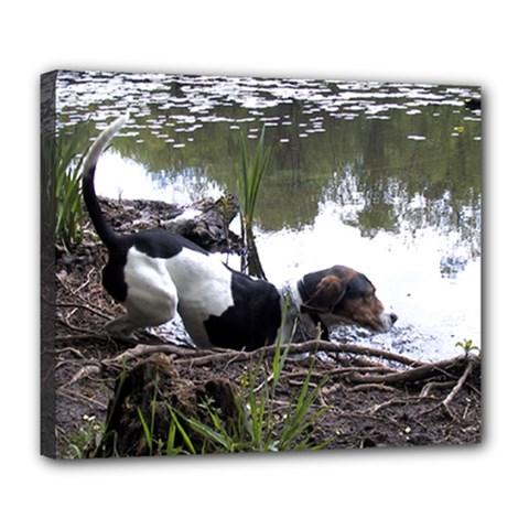 Treeing Walker Coonhound In Water Deluxe Canvas 24  x 20