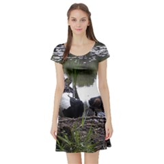 Treeing Walker Coonhound In Water Short Sleeve Skater Dress