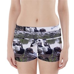 Treeing Walker Coonhound In Water Boyleg Bikini Wrap Bottoms