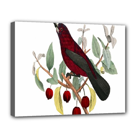 Bird On Branch Illustration Canvas 14  X 11