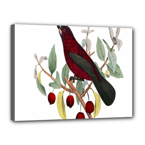 Bird On Branch Illustration Canvas 16  X 12