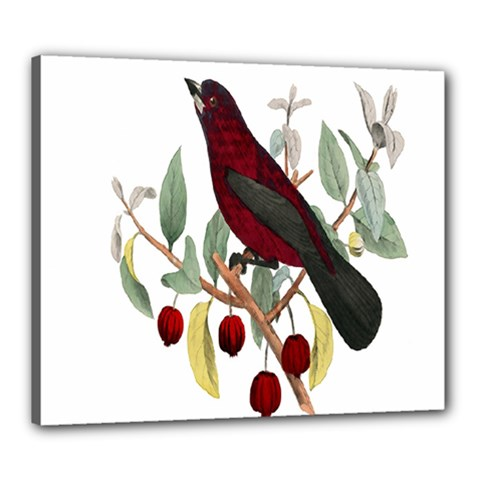 Bird On Branch Illustration Canvas 24  X 20