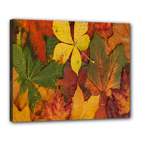 Colorful Autumn Leaves Leaf Background Canvas 20  X 16