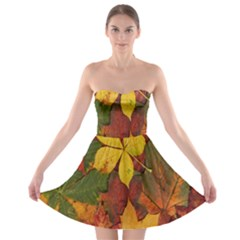 Colorful Autumn Leaves Leaf Background Strapless Bra Top Dress