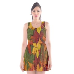 Colorful Autumn Leaves Leaf Background Scoop Neck Skater Dress