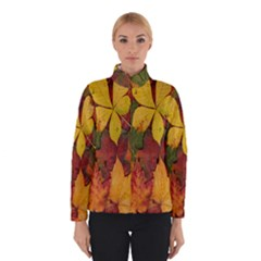 Colorful Autumn Leaves Leaf Background Winterwear