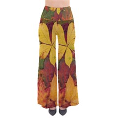 Colorful Autumn Leaves Leaf Background Pants