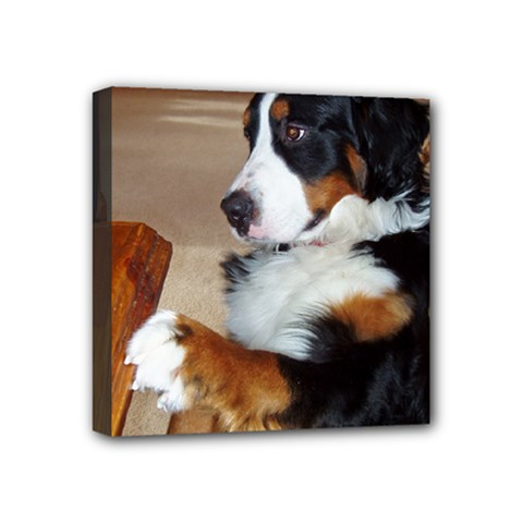 Bernese Mountain Dog Begging Mini Canvas 4  x 4
