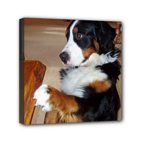 Bernese Mountain Dog Begging Mini Canvas 6  x 6