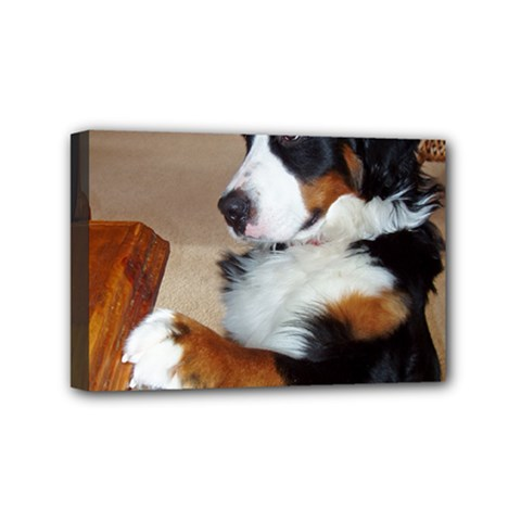 Bernese Mountain Dog Begging Mini Canvas 6  x 4