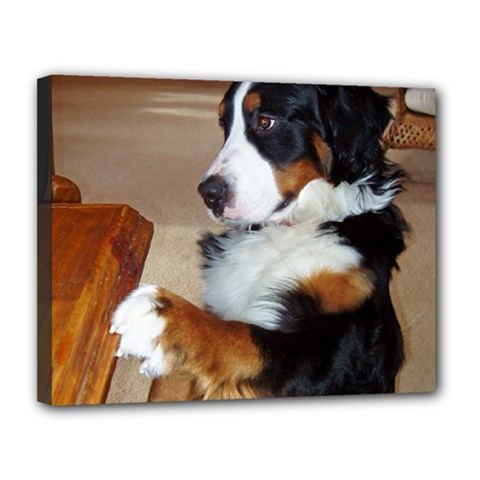Bernese Mountain Dog Begging Canvas 14  x 11