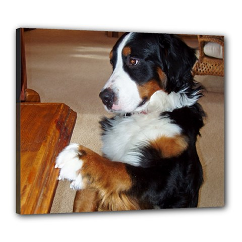 Bernese Mountain Dog Begging Canvas 24  x 20