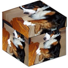 Bernese Mountain Dog Begging Storage Stool 12