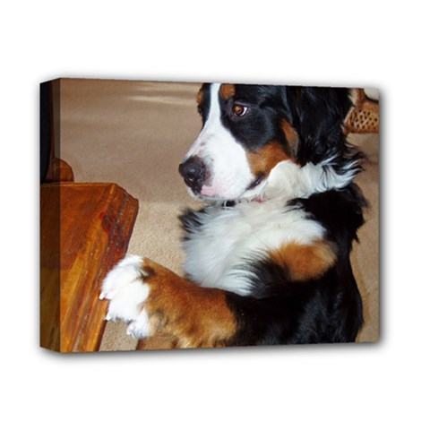 Bernese Mountain Dog Begging Deluxe Canvas 14  x 11