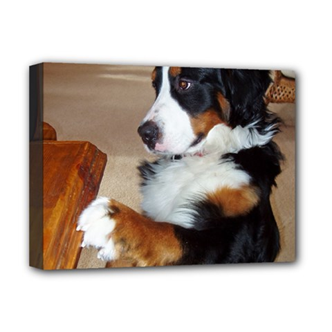 Bernese Mountain Dog Begging Deluxe Canvas 16  x 12