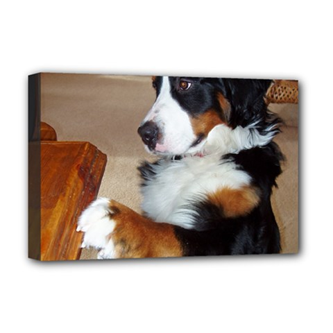 Bernese Mountain Dog Begging Deluxe Canvas 18  x 12