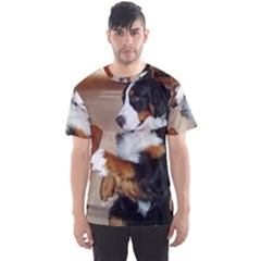 Bernese Mountain Dog Begging Men s Sport Mesh Tee