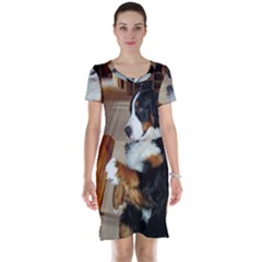 Bernese Mountain Dog Begging Short Sleeve Nightdress
