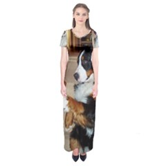 Bernese Mountain Dog Begging Short Sleeve Maxi Dress
