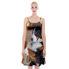 Bernese Mountain Dog Begging Spaghetti Strap Velvet Dress