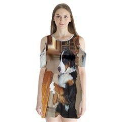 Bernese Mountain Dog Begging Shoulder Cutout Velvet  One Piece