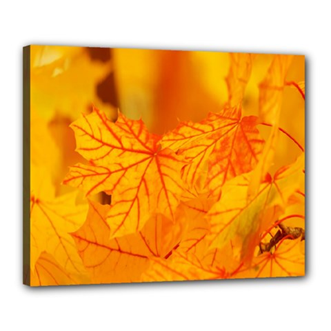 Bright Yellow Autumn Leaves Canvas 20  X 16
