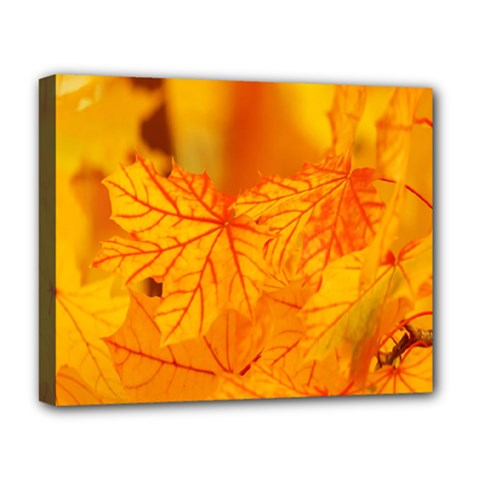 Bright Yellow Autumn Leaves Deluxe Canvas 20  X 16