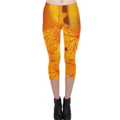 Bright Yellow Autumn Leaves Capri Leggings