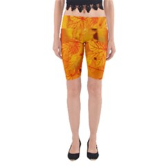 Bright Yellow Autumn Leaves Yoga Cropped Leggings