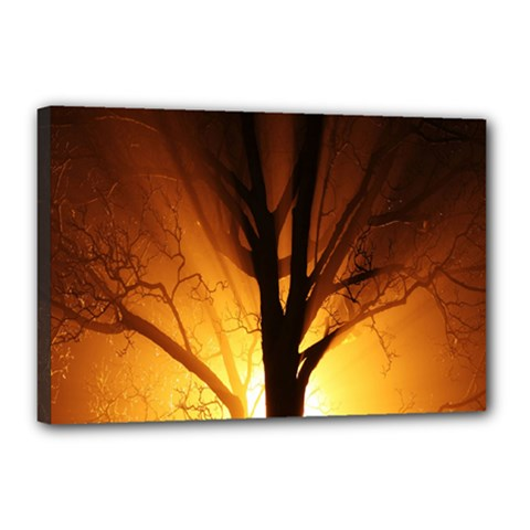 Rays Of Light Tree In Fog At Night Canvas 18  X 12