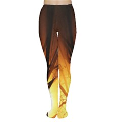 Rays Of Light Tree In Fog At Night Women s Tights