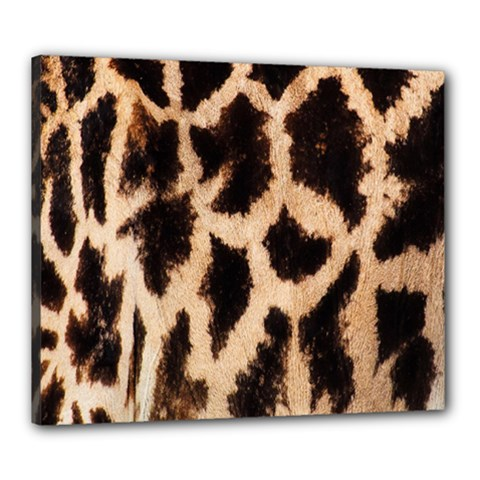 Yellow And Brown Spots On Giraffe Skin Texture Canvas 24  X 20