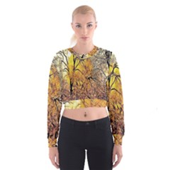 Summer Sun Set Fractal Forest Background Women s Cropped Sweatshirt