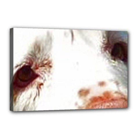 Clumber Spaniel Eyes Canvas 18  x 12