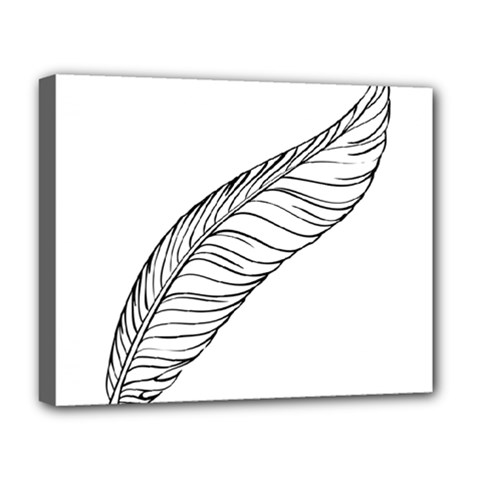 Feather Line Art Deluxe Canvas 20  X 16