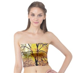 Summer Sun Set Fractal Forest Background Tube Top