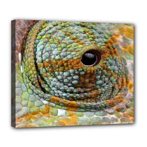 Macro Of The Eye Of A Chameleon Deluxe Canvas 24  x 20