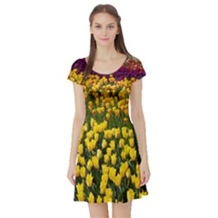 Colorful Tulips In Keukenhof Gardens Wallpaper Short Sleeve Skater Dress
