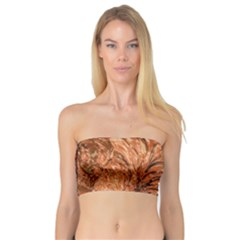 3d Glass Frame With Fractal Background Bandeau Top