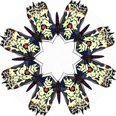 A Colorful Butterfly Image Folding Umbrellas