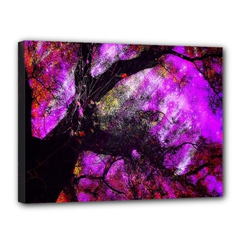 Pink Abstract Tree Canvas 16  X 12