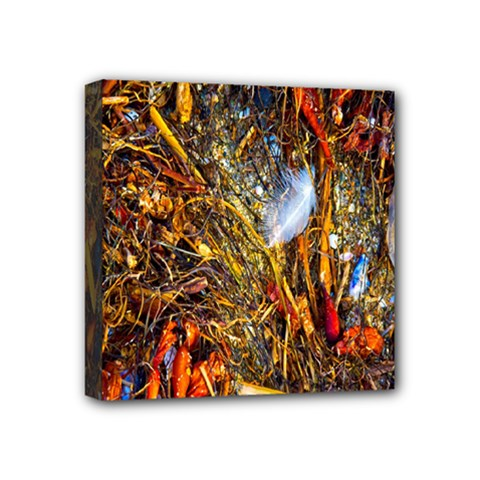 Abstract In Orange Sealife Background Abstract Of Ocean Beach Seaweed And Sand With A White Feather Mini Canvas 4  x 4