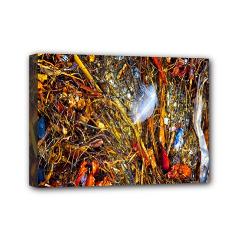 Abstract In Orange Sealife Background Abstract Of Ocean Beach Seaweed And Sand With A White Feather Mini Canvas 7  x 5
