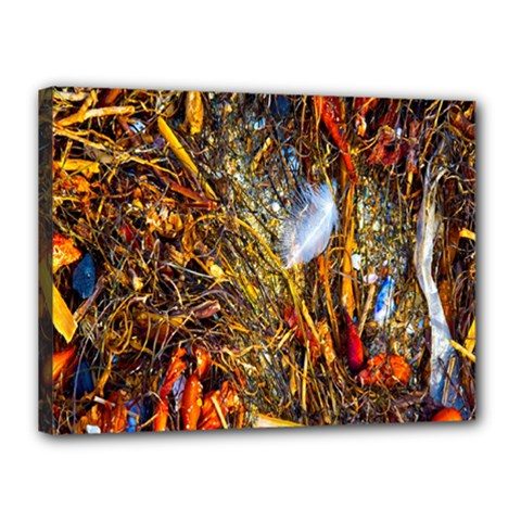 Abstract In Orange Sealife Background Abstract Of Ocean Beach Seaweed And Sand With A White Feather Canvas 16  x 12