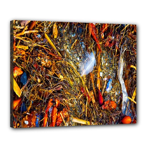 Abstract In Orange Sealife Background Abstract Of Ocean Beach Seaweed And Sand With A White Feather Canvas 20  x 16