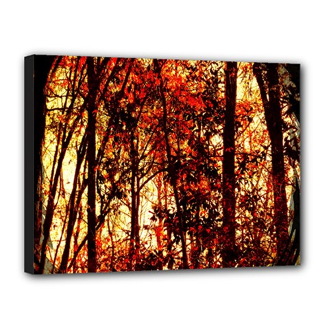 Forest Trees Abstract Canvas 16  X 12