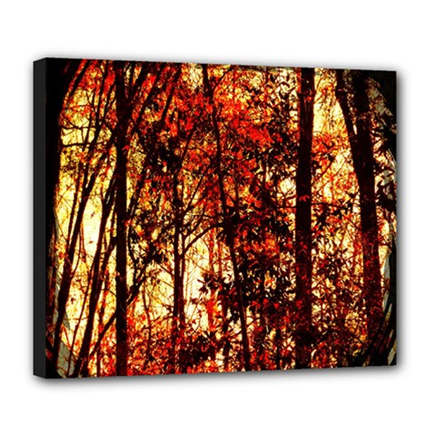 Forest Trees Abstract Deluxe Canvas 24  x 20